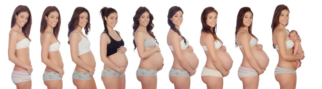 Evolution of pregnancy